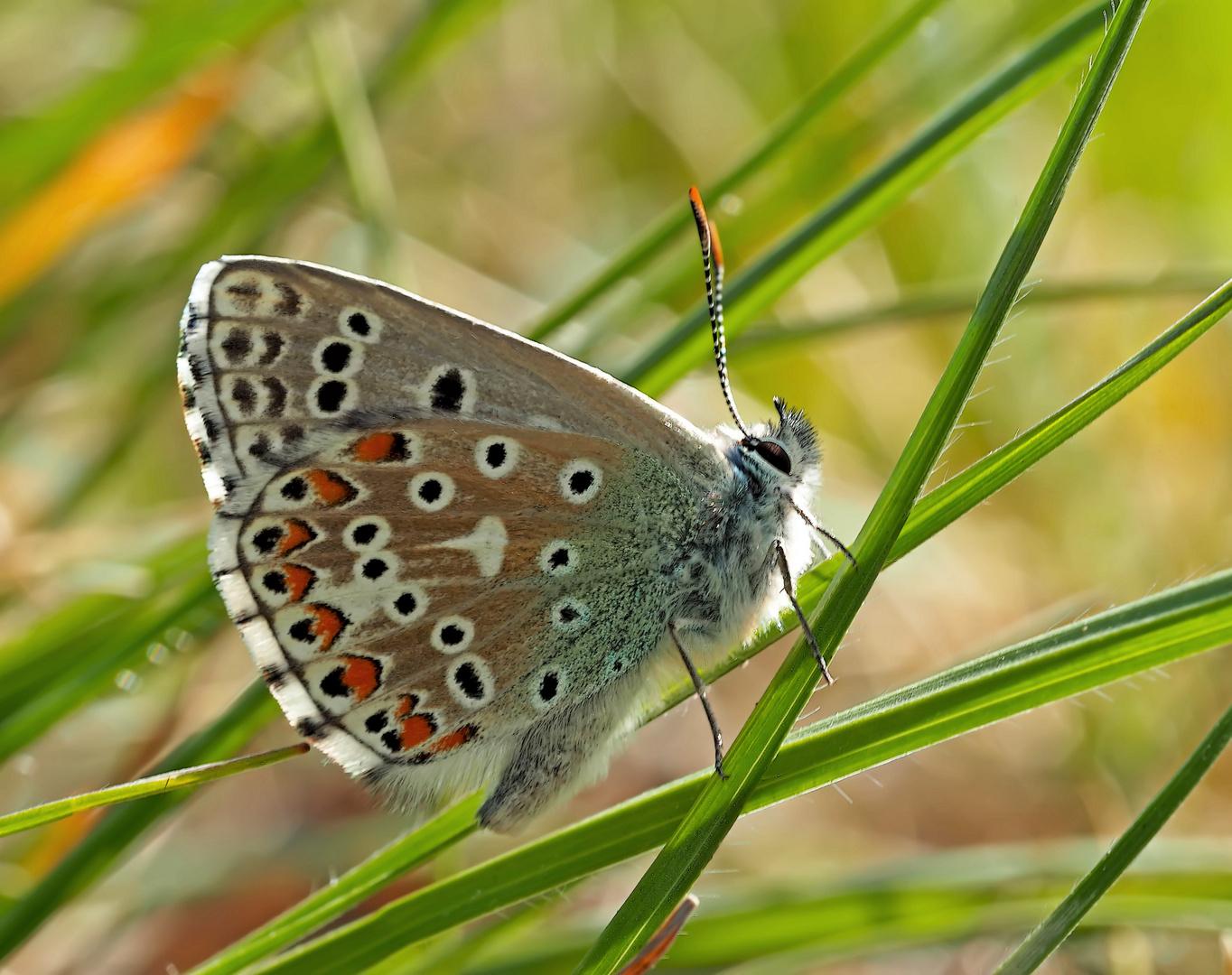 Hurra, der Frühling mit den prächtigen Schmetterlingen ist wieder da!