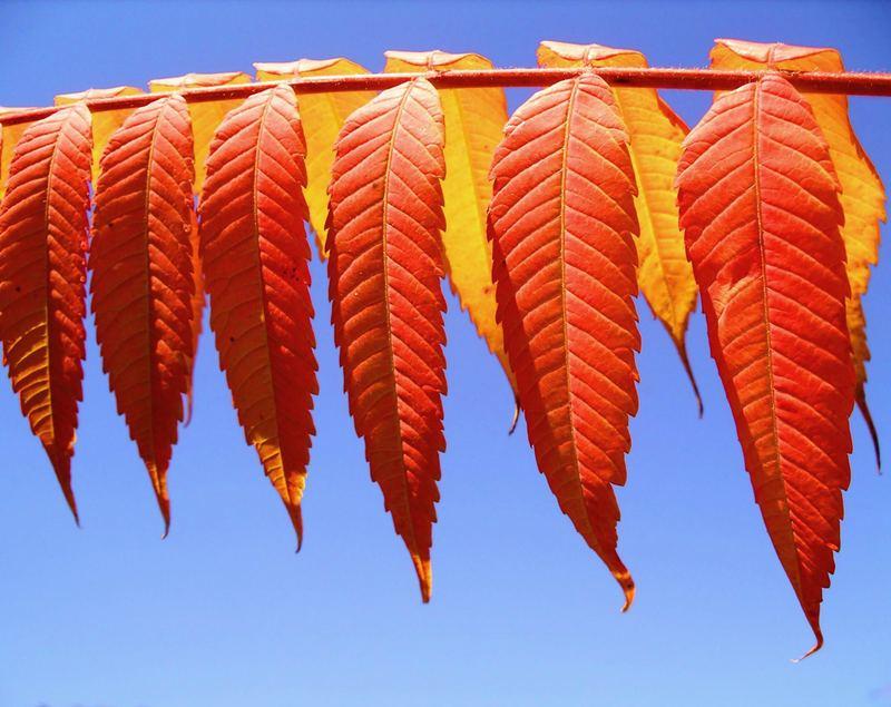 Hurra, hurra...der Herbst ist da!!!