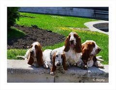 Hush! Puppies!!!