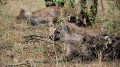 Hyäne, Kenia