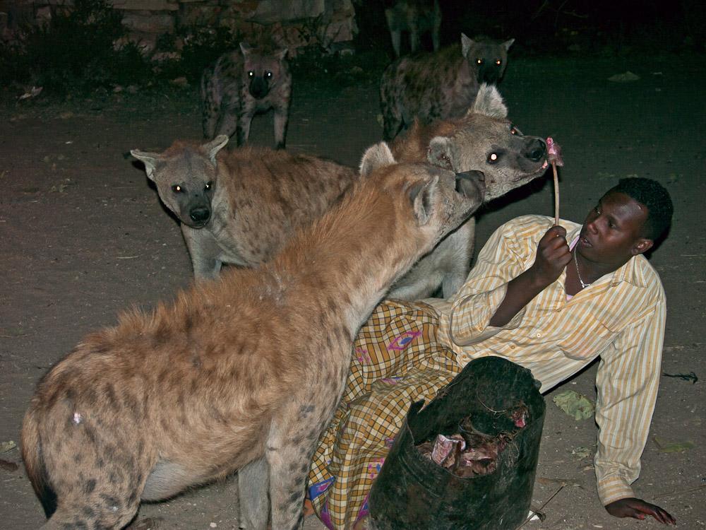 Hyänenmann Harar