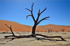 Hydra of the Dead Vlei....