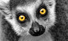 Hypnothisierende Augen .....