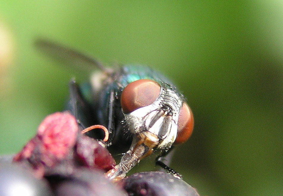 I am a fly