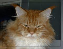 I am not amused!