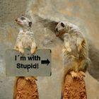 """I am with Stupid"""