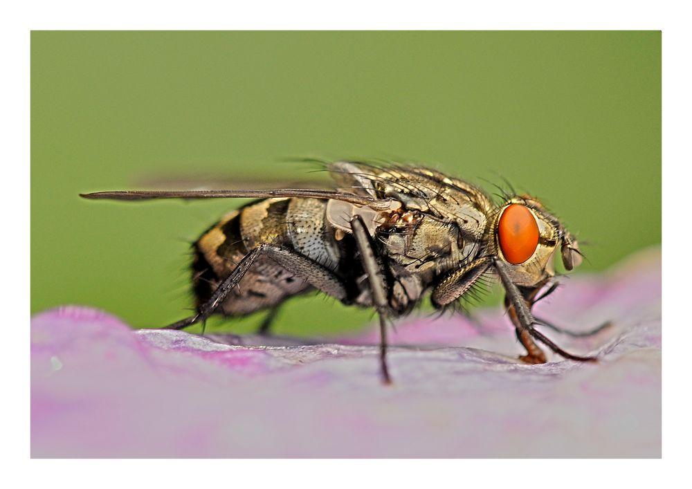 I believe I'm a fly