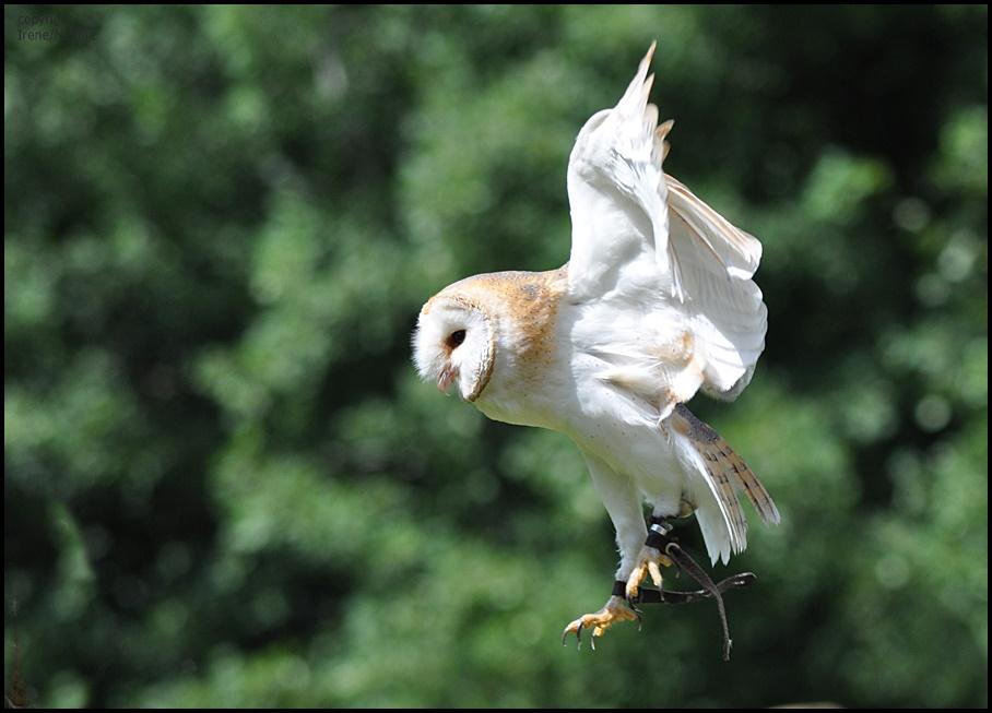 I belive i can fly !!!