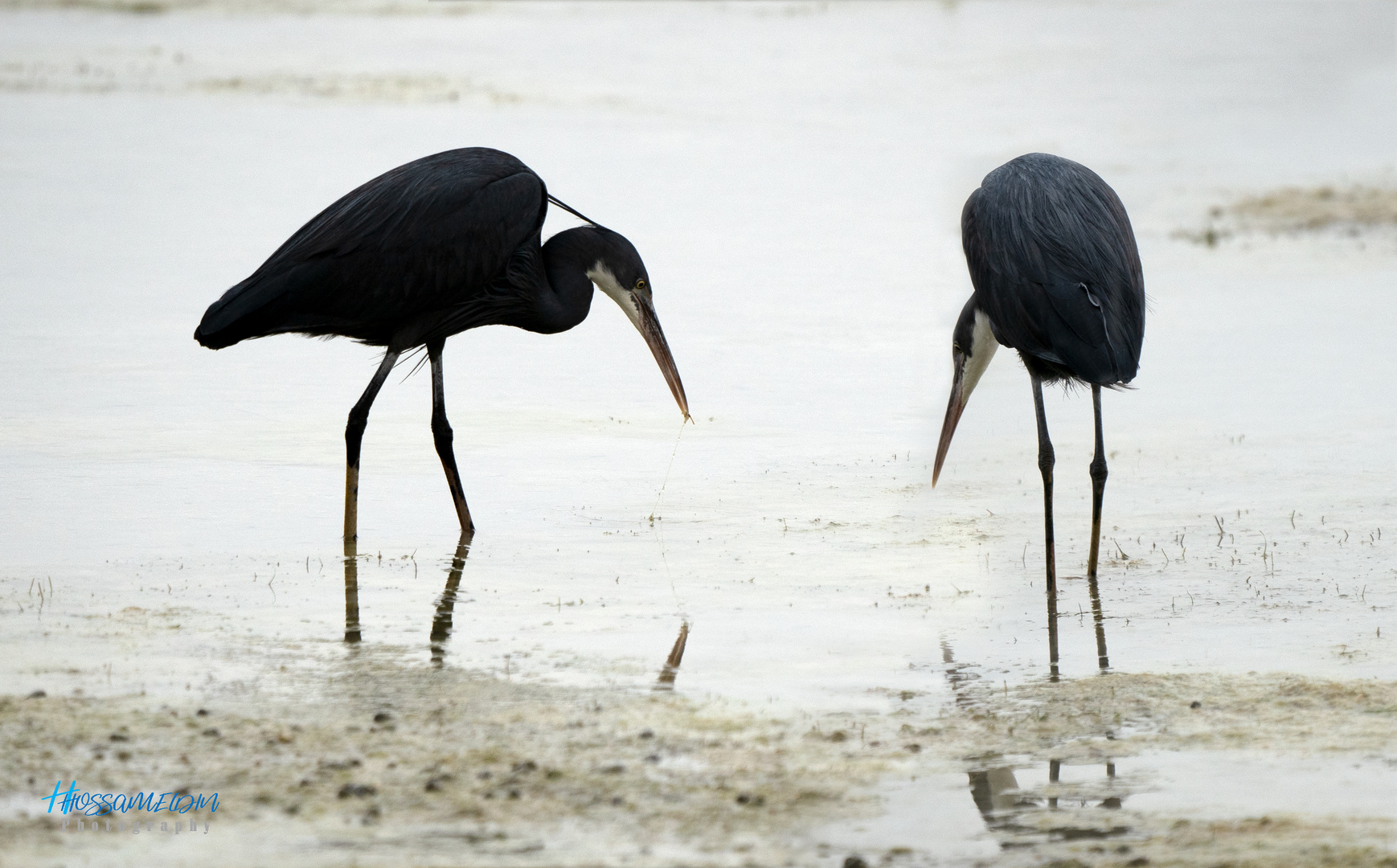 I can see your beak !!