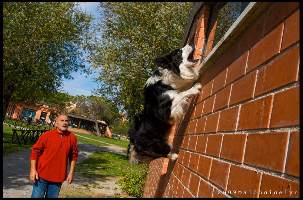 i cani non volano