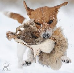 I CATCH THE FOX I