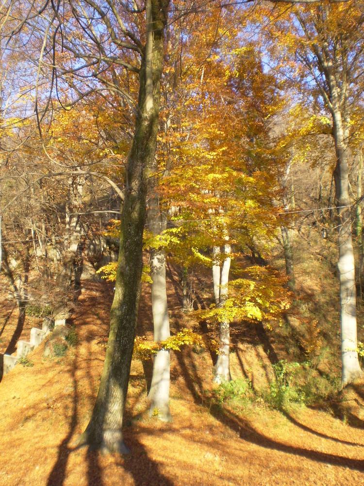 I colori del bosco..