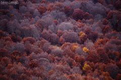 I colori del bosco