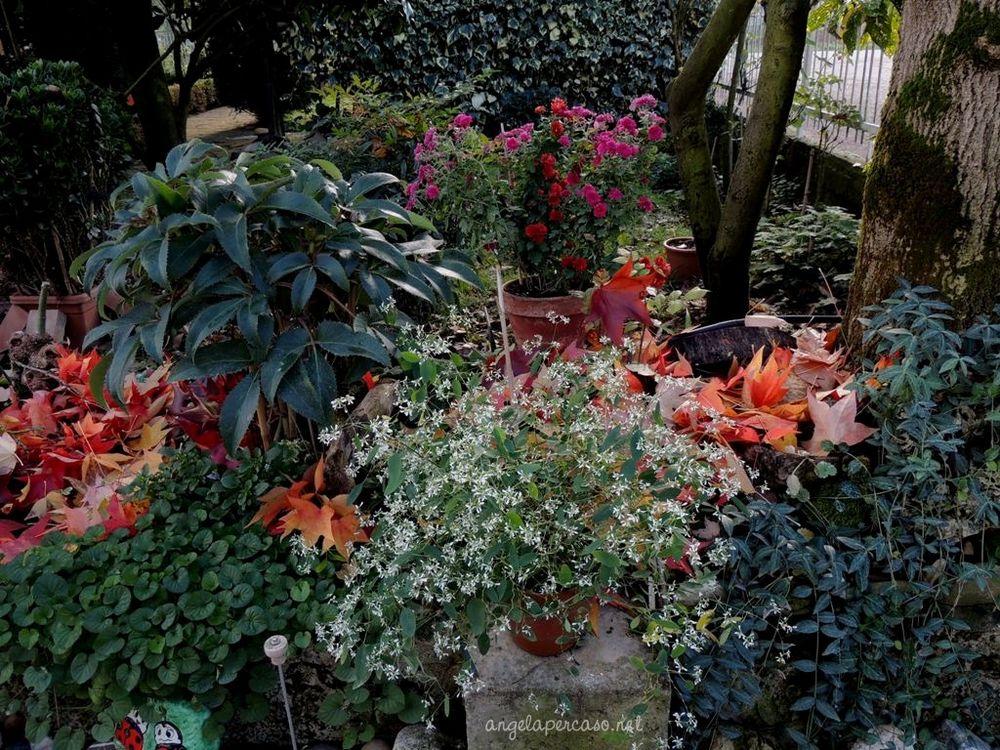 i colori del giardino