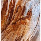 i colori del legno
