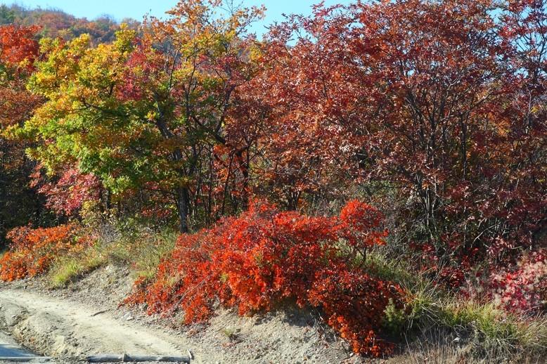i colori dell' autunno 2