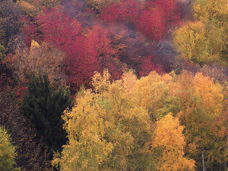 -i colori della natura-
