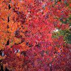 I colori della natura (1)