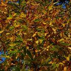 I colori della natura (2)