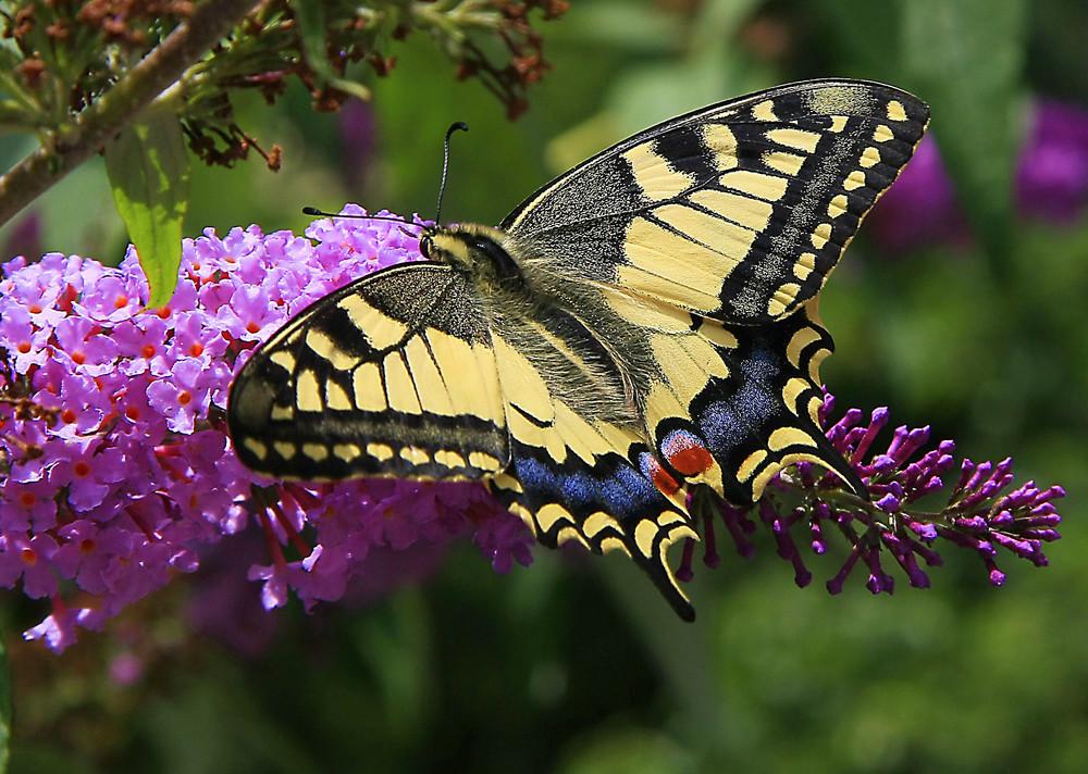 I colori della natura foto immagini macro e close up - Immagini di tacchini a colori ...
