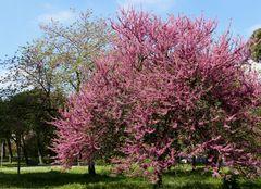 i colori della primavera...