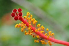 I colori della primavera.