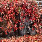 I colori dell'autunno a Monza