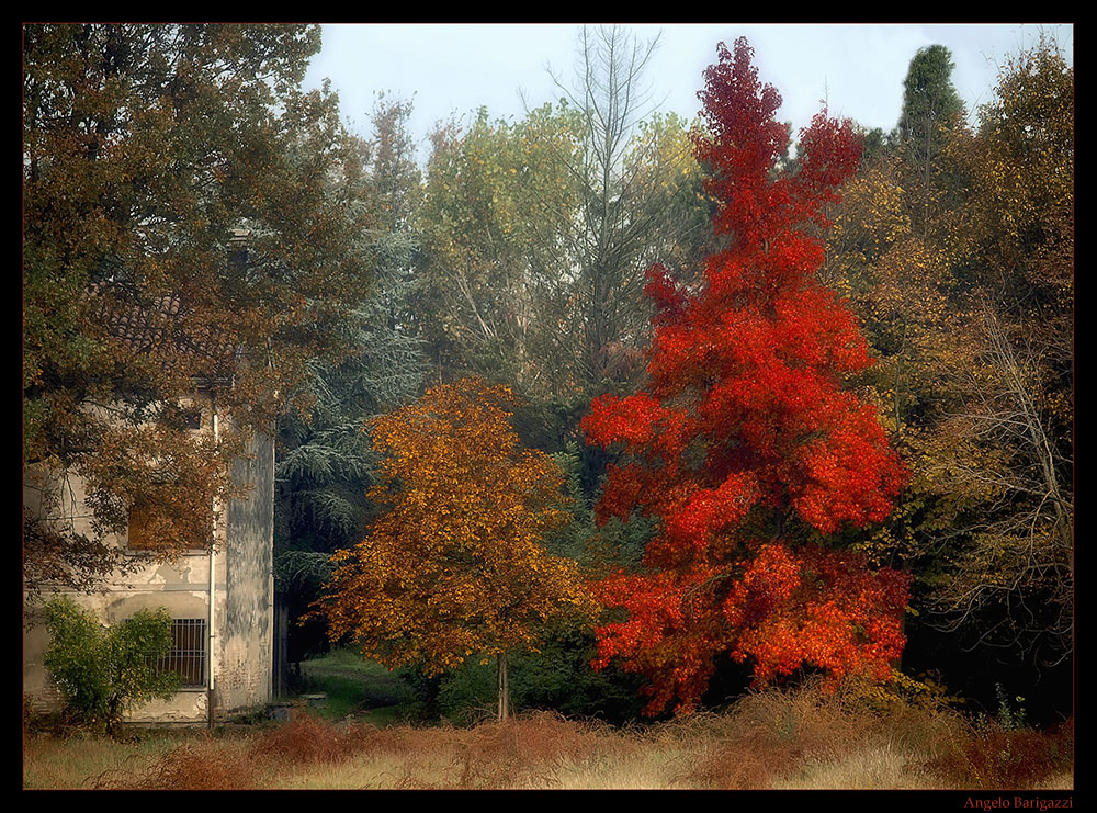 """"""" I colori dell'autunno """""""
