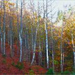 I colori dell'autunno.