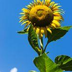 I colori dell'estate!!!