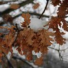 I colori dell'inverno