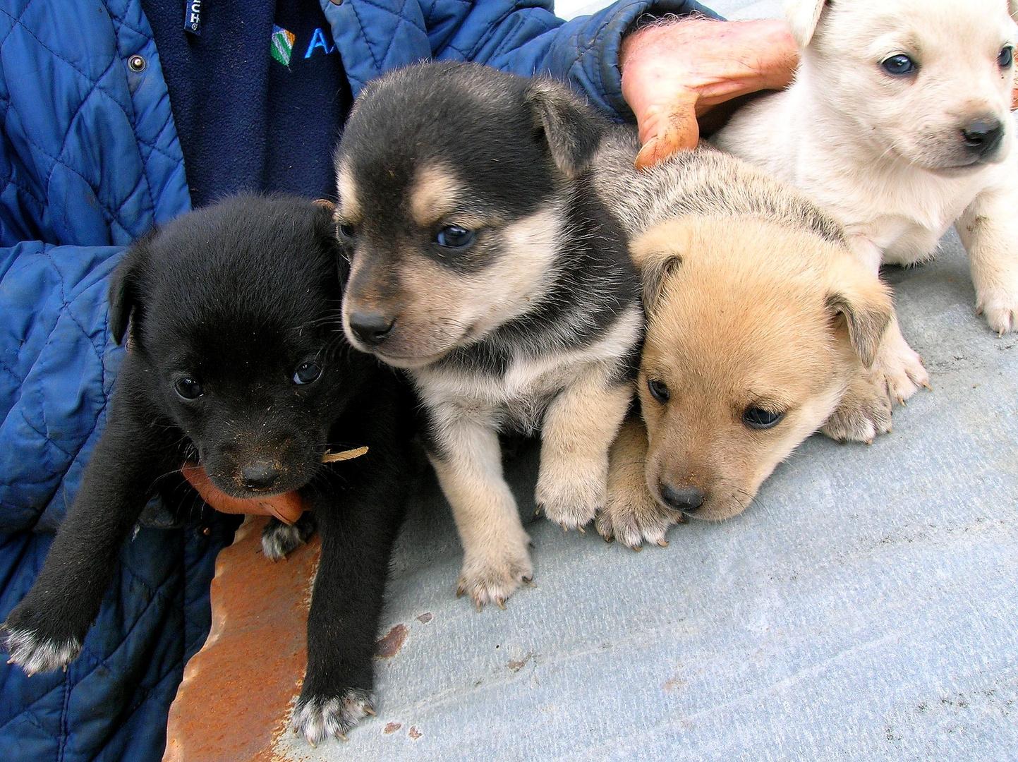 I cuccioli di Lilli crescono...
