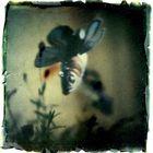 I dreamed of flying fish last night