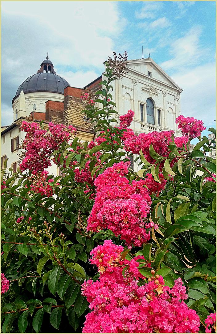 i fiori delll'estate...