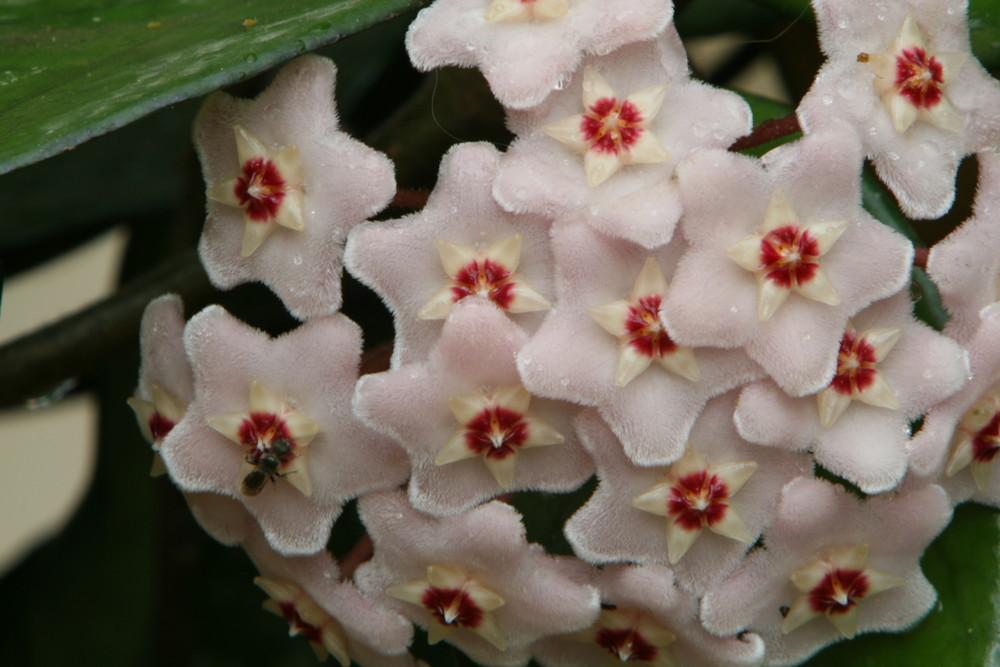i fiori di mia madre