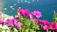 I fiori di Positano