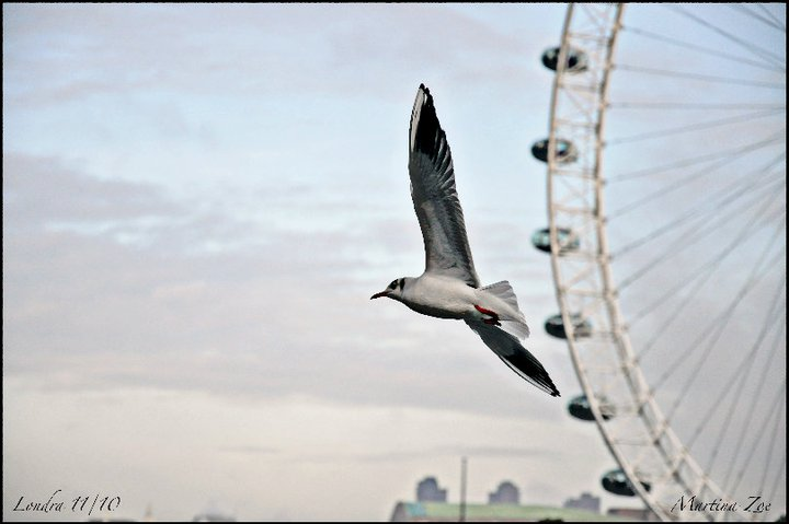 I fly on the London Eye!