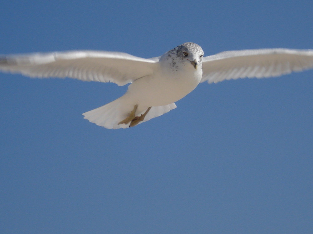 I fly so high...