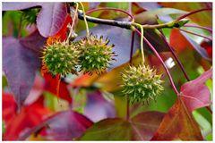 i frutti dell autunno.....