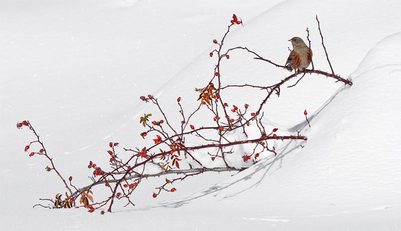 I frutti dell'inverno