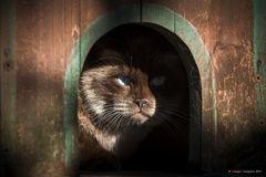 I gatti del gattile # 4