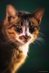 I gatti del gattile # 5
