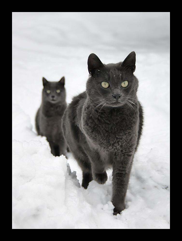 I gatti delle nevi