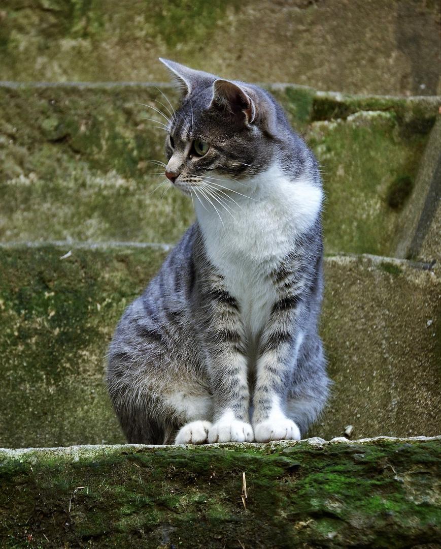 I gatti di Apricale