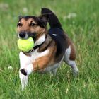 I got the ball, yippey yippey yhea