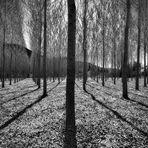 I labirinti della vita