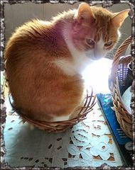 I like baskets