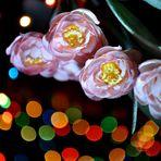 I Like Bokeh Photography :-)