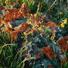 I Like Lichen