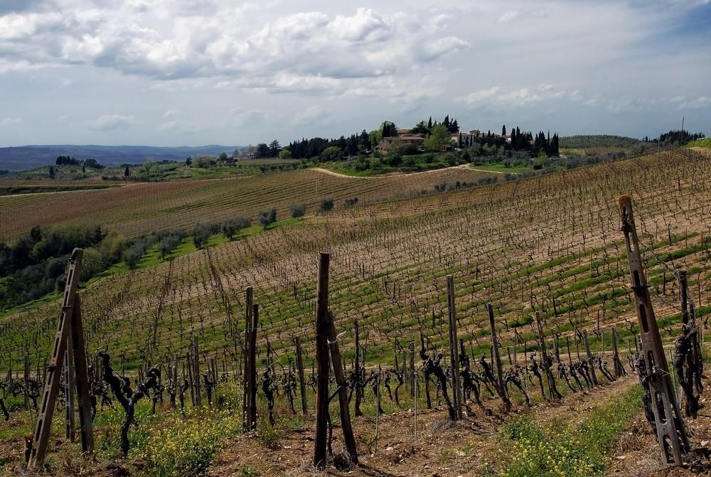 I love Toscana II